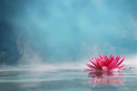 fiore di loto significato fiore di loto caratteristiche e significato nelle varie