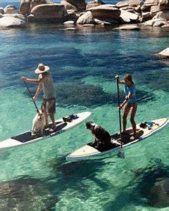 patio boat rental lake tahoe dog friendly beaches at lake tahoe