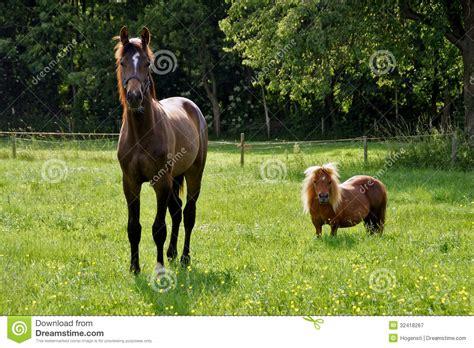 pre image cheval et poney dans le pr 233 image stock image 32418267