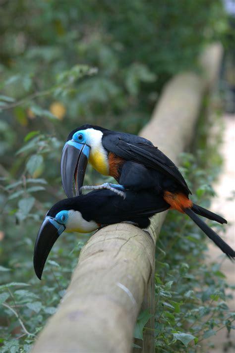 file rhastos vitellinus birds of eden south africa