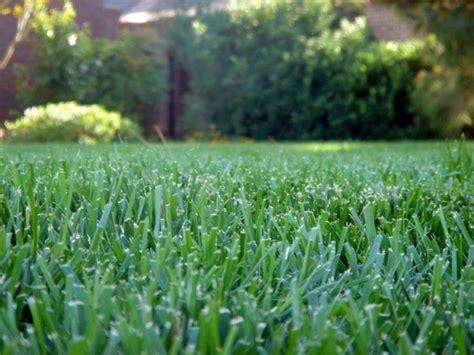 tappeti erbosi per giardino tappeti erbosi prato tappeto erboso prato