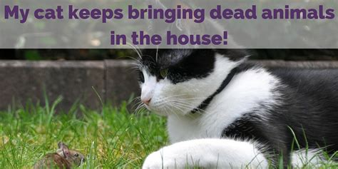 my dog wont stop peeing in the house my wont stop in the house 28 images my cat keeps bringing in dead animals the