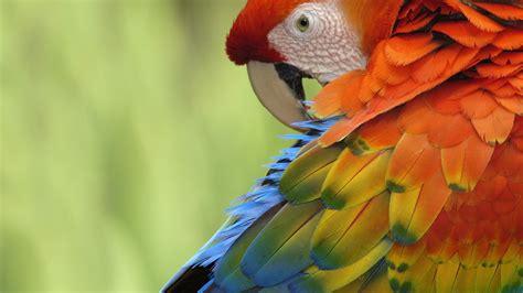 wallpaper full hd parrot birds parrot wallpaper hd desktop wallpapers 4k hd