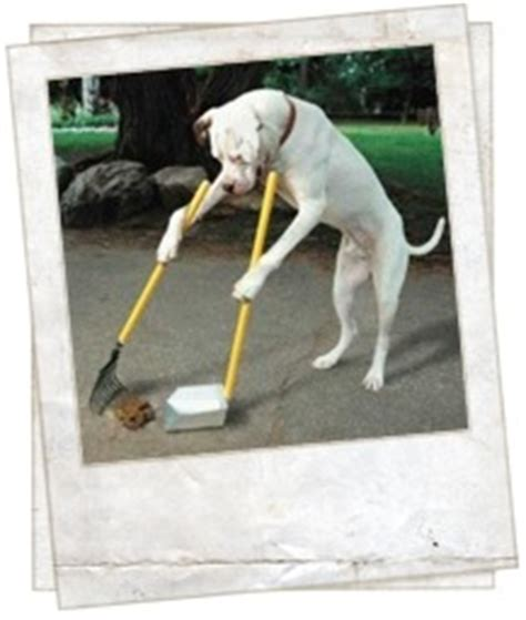 dog accidents in house how to stop dog poop accidents top 5 mistakes dog owners make