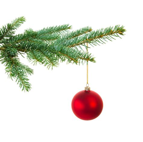 29 news bed bugs in christmas trees dangers of bringing in tree bugs discussed in recent article from clean crawls