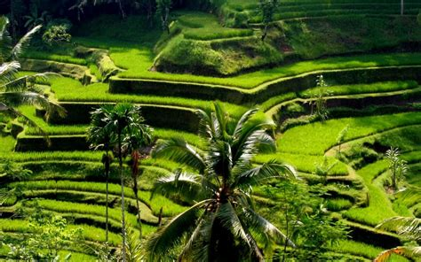 Hanging Gardens Ubud 7 recommended tourists attractions you mustvisit in ubud