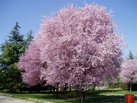 Imagenes De Flores Y Arboles | fotos de fotos de arboles y flores