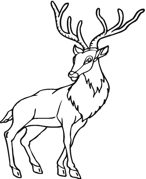 Deer Animals Coloring Coloring Pages Free Deer Coloring Pages