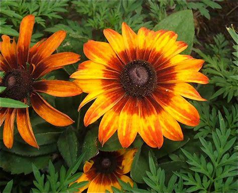 piante infestanti giardino piante infestanti elenco caratteristiche e rimedi fai
