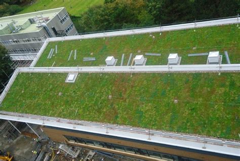 sig design technology how much will a green roof weigh a guide to your options