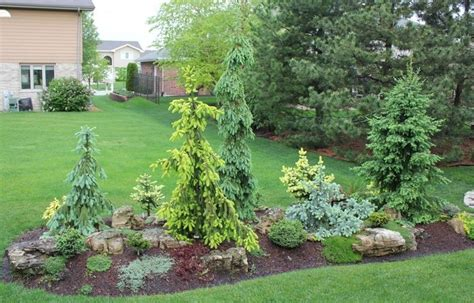 Conifer Garden Ideas Start Of A Conifer Garden On A Berm Garden Quot In Pursuit Of Conifers Ben And S