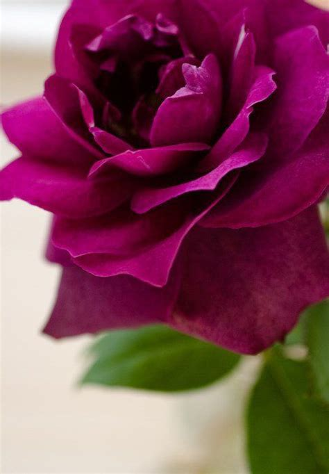 Olive Magenta Flower 25 best ideas about purple flower names on