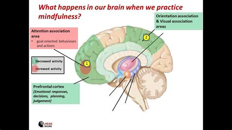 What Happens In Or What Happens In Our Brain When We Practice Mindfulness