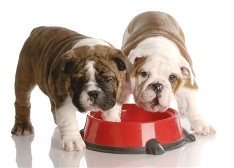 when to feed puppies feeding your what you need to