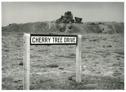 cherry tree drive memoryprints high quality prints