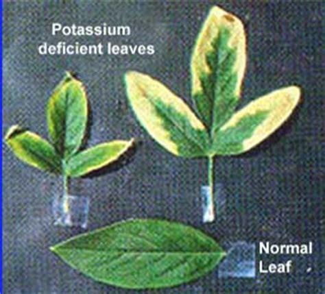 sistem for aquaponic aquaponics nutrient deficiency