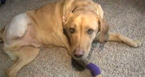 Miracle Dogs Free Miracle Survives Brush With And Brings Family Together