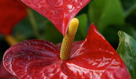 Pflanzen Die Kaum Licht Brauchen by 10 Zimmerpflanzen Die Wenig Licht Brauchen