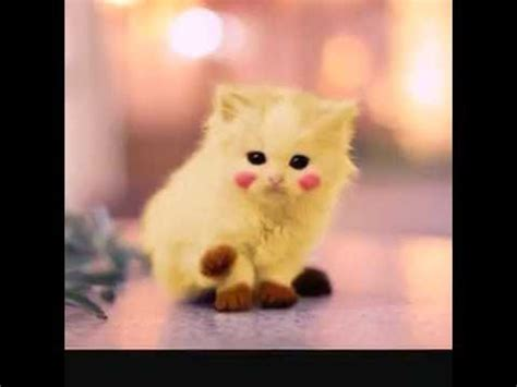 imagenes kawii de gatos gatos kawaii youtube