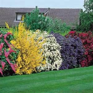 Flowering Shrubs For Afternoon Sun - evergreen shadygardens blog