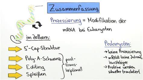 Modification Utation by Prozessierung Rna Modifikation Bei Eukaryoten Biologie