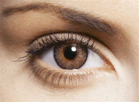 non prescription colored contacts for brown brown freshlook non prescription colored contact lenses by