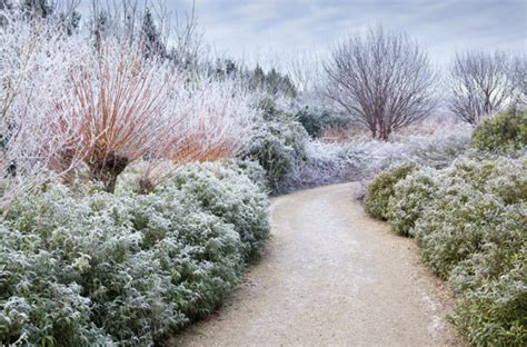 winter garden landscaping ideas rated people blog