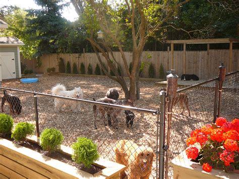 dog friendly backyard ideas healthy paws
