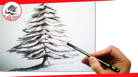 draw realistic christmas trees how to draw a realistic tree with pencil draw step by step