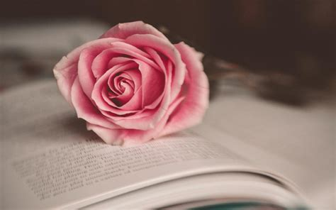 roses books how to draw a step by step flowers pop
