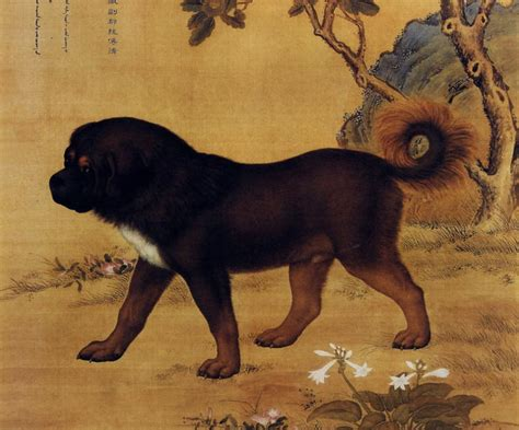 ancient dogs a loyal companion and much more dogs in ancient china ancient origins