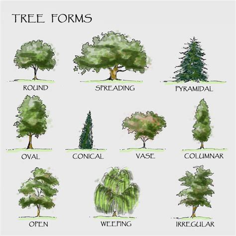 landscaping trees the diagram shows different forms of trees for more information on
