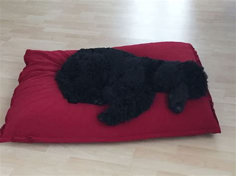 futon gesund the divan orthopaedic pet bed is the classic of our pet
