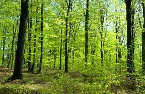 el bosque de los 0060762195 26 de junio d 237 a internacional de la preservaci 243 n de bosques tropicales