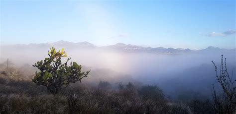images prickly pear fog mountains landscape