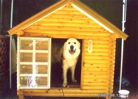 cucce da interno per cani taglia grande cucce per cani taglia grande da esterno galleria di immagini