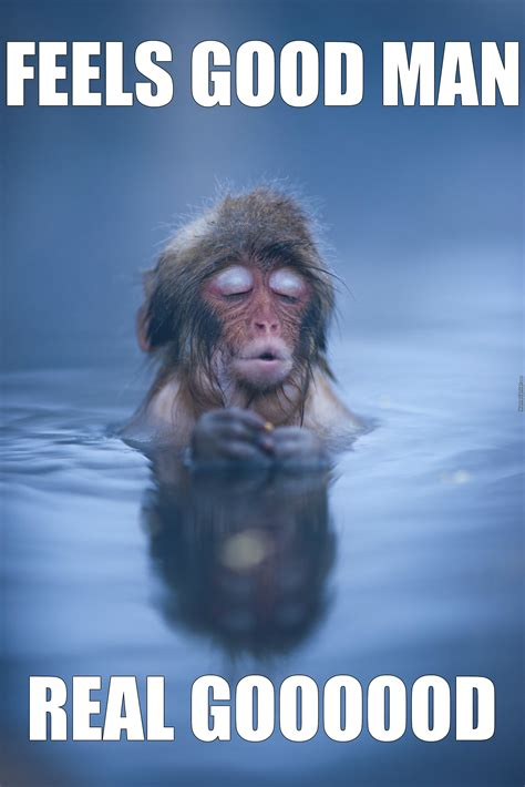 Relaxing Memes - a monkey relaxing in a hot spring by m h m meme center