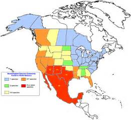 teaching suggestions mapping hummingbird species
