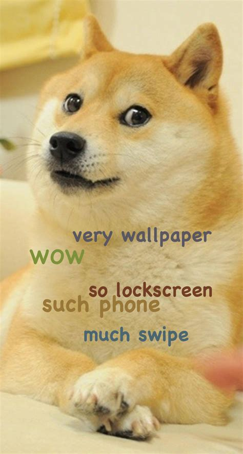 doge meme wallpaper wallpapersafari