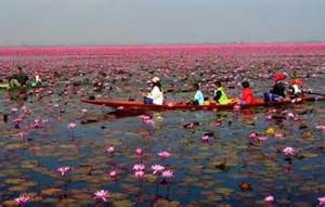 Lotus Lake Best Recent Additions Edition 2010 10 25 Atlas Obscura