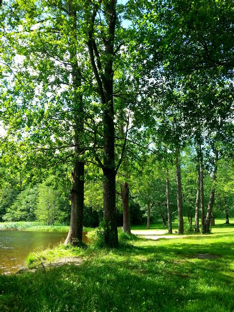 Free Images Tree Water tree water use landscape trees 100 images free images