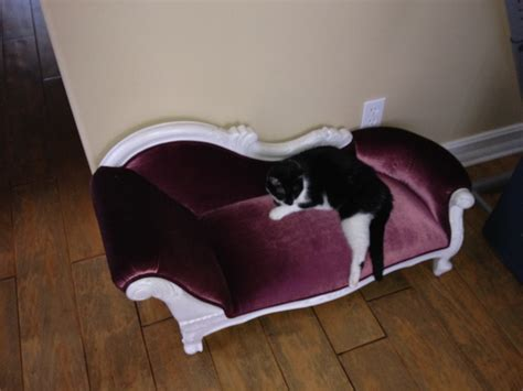 luxury cat beds luxury cat bed www imgkid com the image kid has it