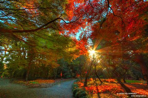Sunset Garden by Deloprojet Magic Fall Wedding And Sunset In Japanese Garden