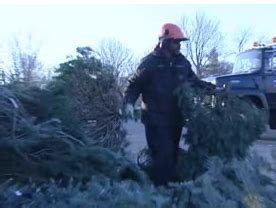 closest christmas tree drop city of indianapolis reveals tree disposal drop locations fox59