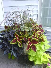 foliage plants for containers images