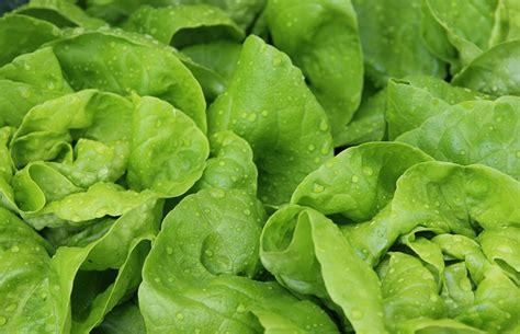 5 alimenti da evitare assolutamente per una corretta alimentazione dieta contro gastrite cosa mangiare dieta co
