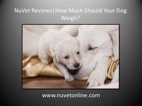 how much will my puppy weigh nuvet reviews how much should your weigh