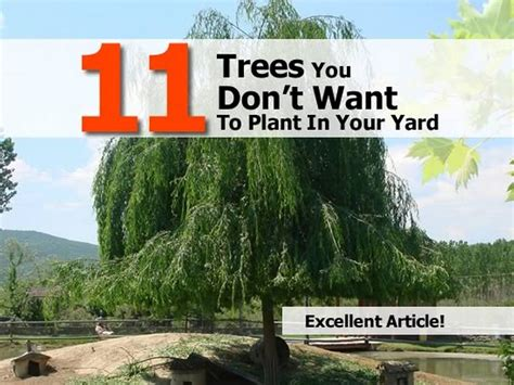 11 trees you don t want to plant in your yard