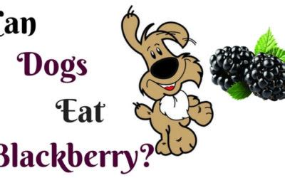 can dogs blackberries home dogbabe