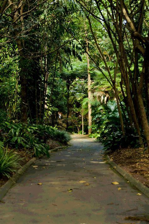 Mount Coot Tha Botanic Gardens Brisbane Kids Mount Coot Tha Botanic Gardens